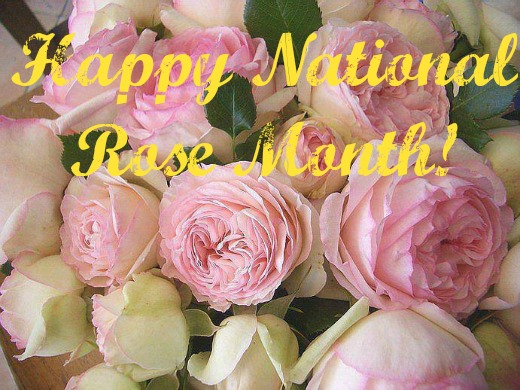 Cabbage_Roses_National_Rose_Month